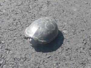 20130413-Turtle