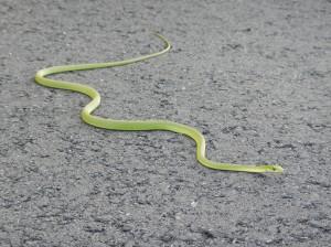 20130511-Snake