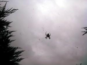 20131019_Spider